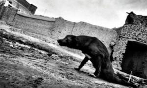 XIII Premio Internacional de Fotografía Humanitaria Luis Valtueña