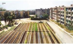 Conferencia Katrin Bohn.¿Qué pasa ca agricultura urban?