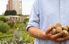 Agricultura urbana Espacios de cultivo para una ciudad sostenible. Graciela Arosemena