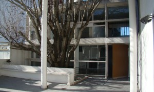Le Corbusier, el arbol y el bosque | Marcelo Gardinetti