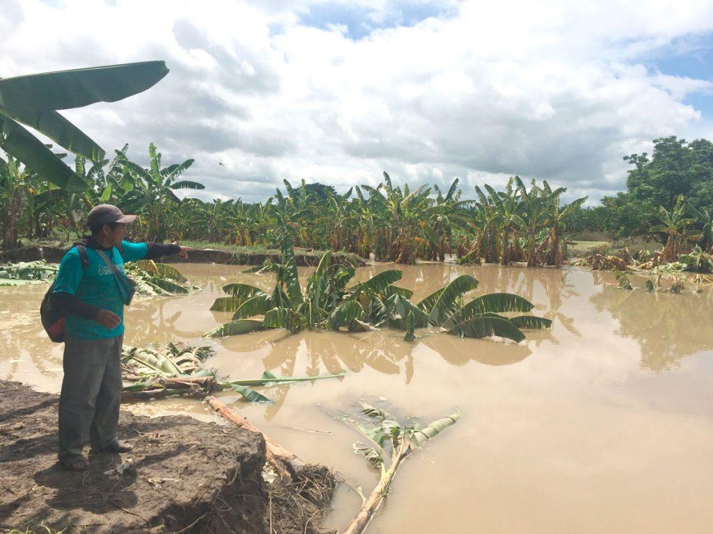 Pérdidas en cultivos en Piura | Fuente: http://eltiempo.pe