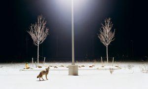 El tiempo del lobo | Antonio S. Río Vázquez